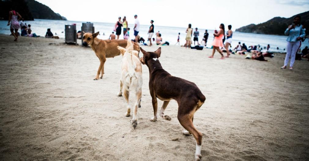 Distrito inicia esterilización de 1400 caninos y felinos en situación de calle y de estratos 1 y 2