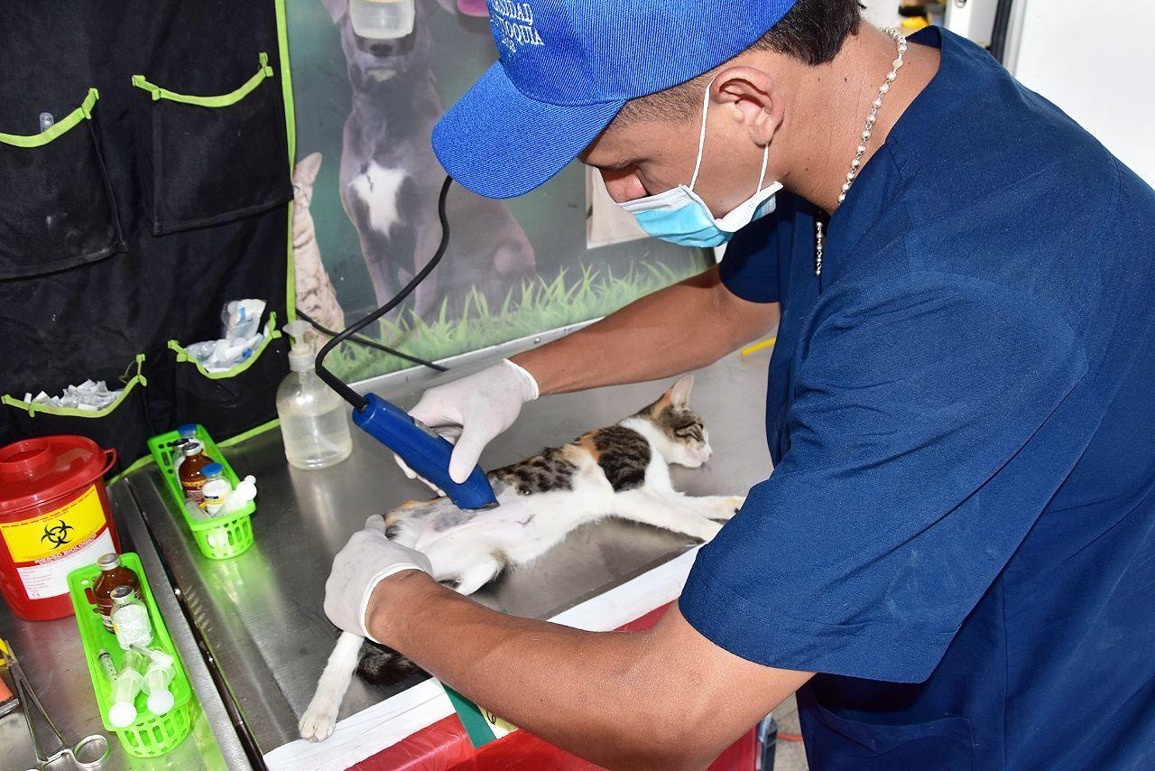 Esterilizaron  a  2.335 animales en la ciudad del cambio