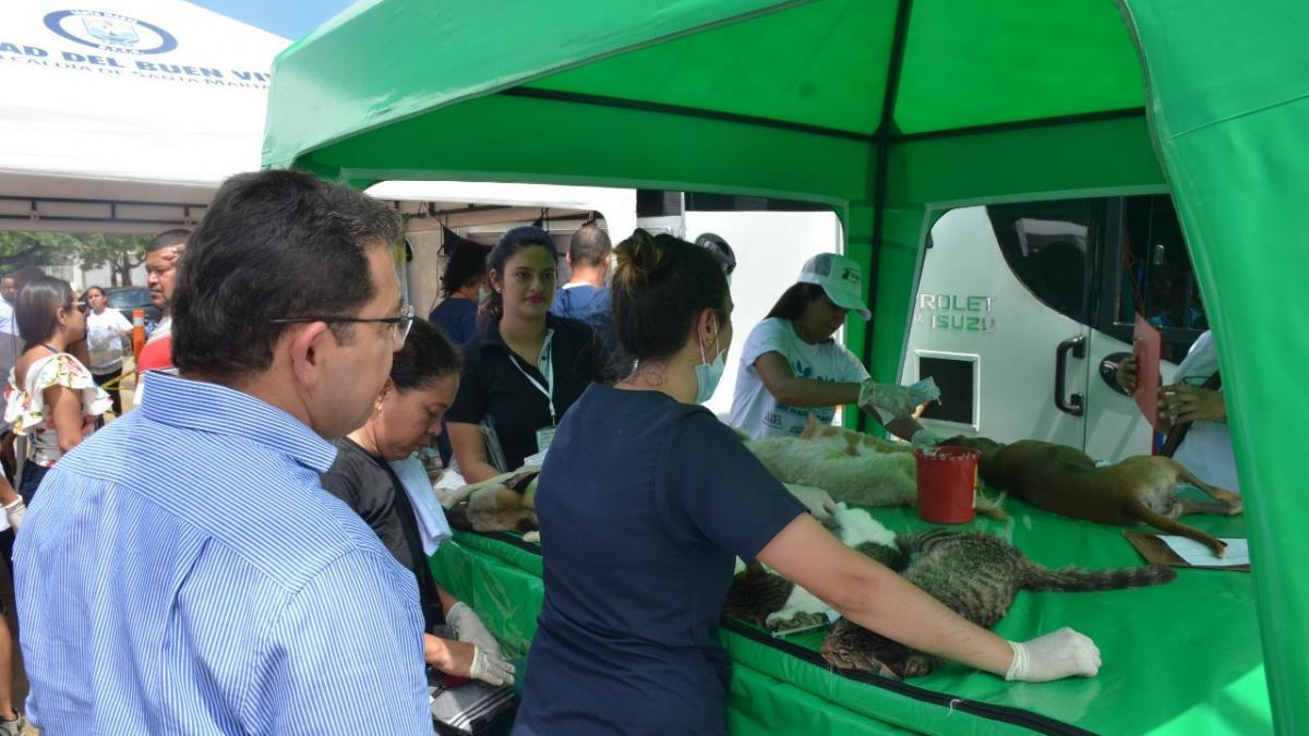 1ra esterilización de perros y gatos se toma Pescaíto con masiva participación ciudadana