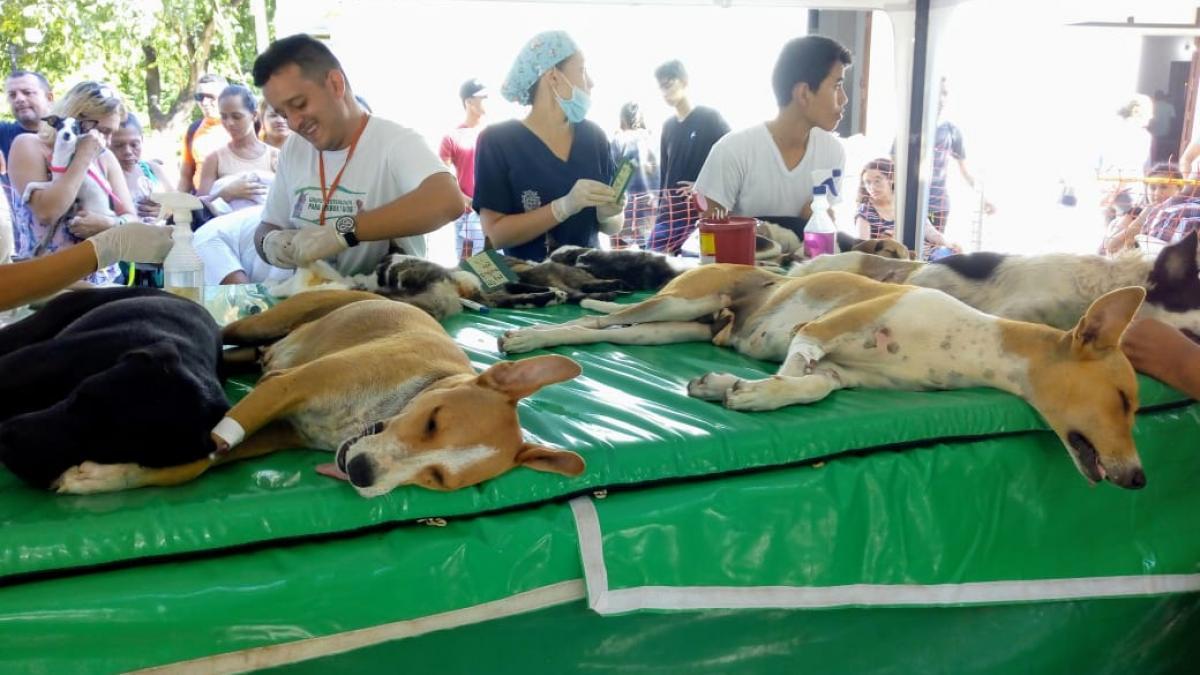 Distrito supera meta de esterilización y anuncia 'Adoptatón' de animalitos