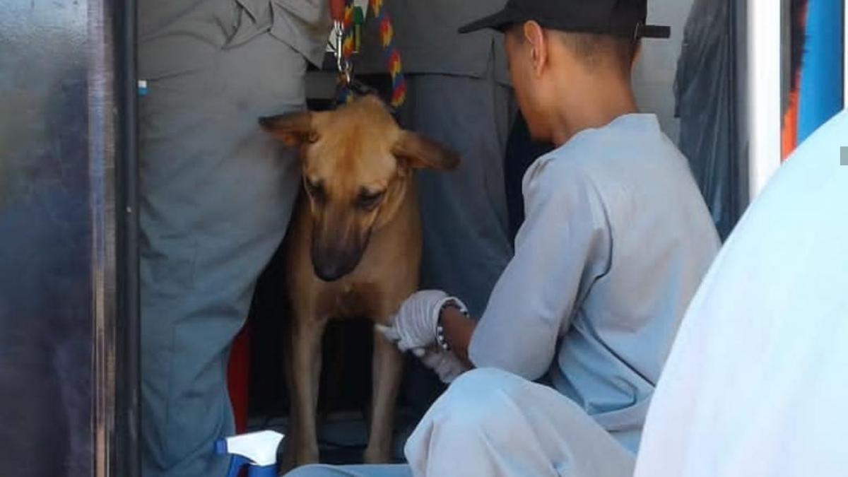 Inscripciones abiertas de voluntarios para Jornada de Esterilización y Castración de caninos