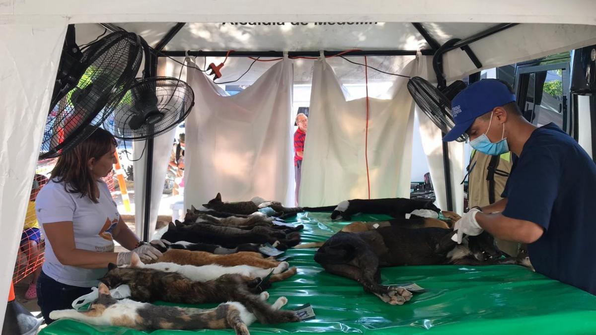 100 felinos y caninos  beneficiados con la VII Jornada de Esterilización de la Alcaldía del Cambio
