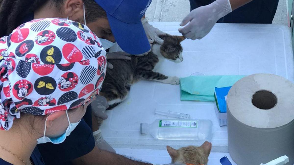 Brigada de atención médica animales en condición de calle en el Parque Deportivo  Bolivariano