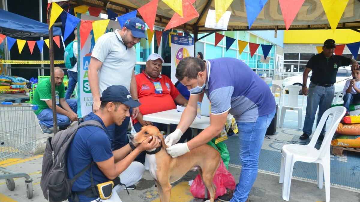 Samarios y Dadsa se solidarizan de forma masiva en Dotatón para animales de calle