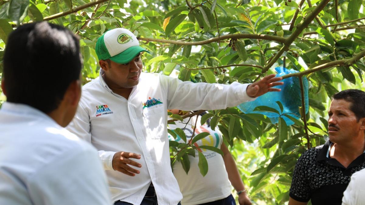 """Distrito pide acompañamiento del ICA a campesinos, ante posible presencia de la """"Mosca de la fruta"""""""