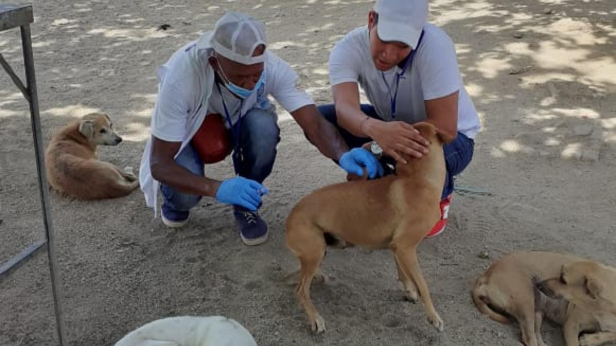 Vacunación canina y felina llega a San Martín, Villa Tabla, San Jorge y Nacho Vives